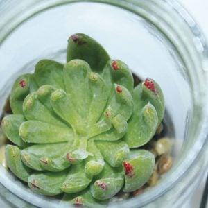 FD18_33_Succulent-Jar_CLOSEUP1
